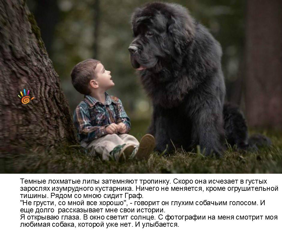 сказка собака и мальчик