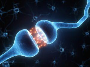 синапс