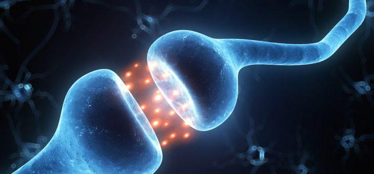 Метафора технаря. О пропасти между нейронами и  убеждениях